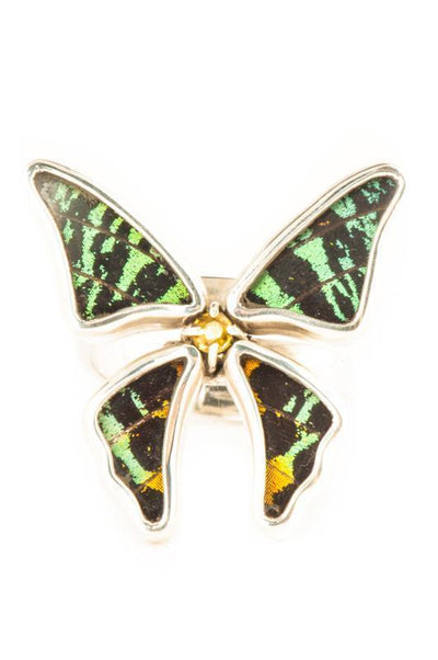 1-Real Butterfly Wings-A-4D-3F-Silver-butterfly-ring-with-citrine-birthstone-Shimmering-Rainbow-Green-Chrysiridia-Madagascari