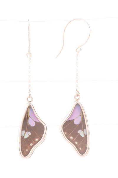 1-Real Butterfly Wings-A-SB-3A-Silver-butterfly-earrings-Purple-Dots-Wing-Shaped-Graphium-Weiskei