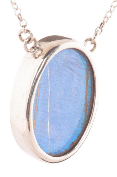 1-Real Butterfly Wings-A-SC-O1-Silver-butterfly-necklace-Iridescent-Blue-Oval-Morpho-Didius
