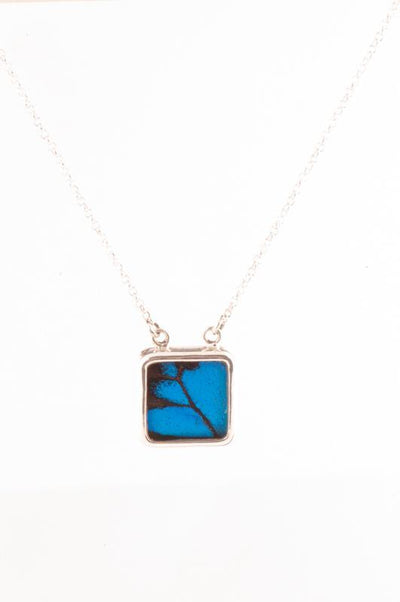 1-Real Butterfly Wings-A-SC-S1-Silver-butterfly-necklace-Royal-Blue-Square-Papilio-Ulysses