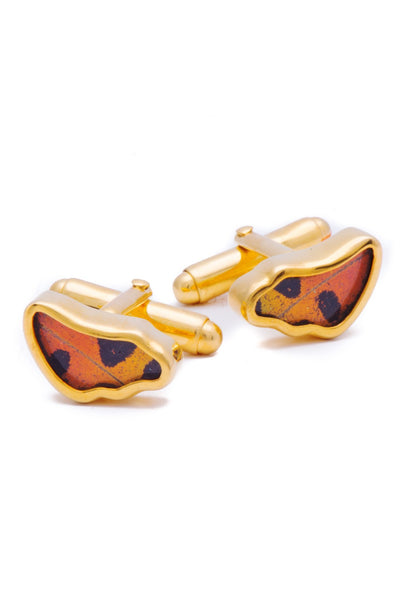 1-Real Butterfly Wings-A-SA-3B-Gold-butterfly-cufflinks-Shimmering-Rainbow-Wing-Shaped-Chrysiridia-Madagascariensis-Bottom-wi