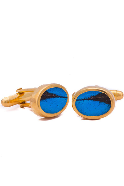 1-Real Butterfly Wings-A-SA-O1-Gold-butterfly-cufflinks-Royal-Blue-Oval-Papilio-Ulysses