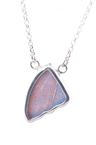 1-Real Butterfly Wings-A-SC-4C-Silver-butterfly-necklace-Iridescent-Blue-Wing-Shaped-Morpho-Didius