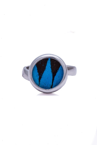 1-Real Butterfly Wings-A-SA-C1-Silver-butterfly-ring-Royal-Blue-Circle-Papilio-Ulysses