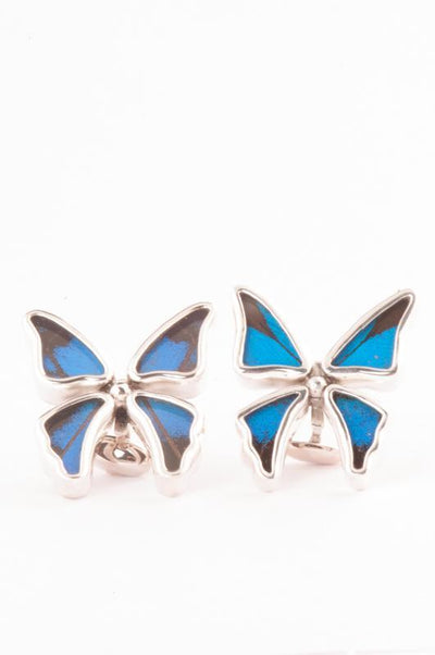 1-Real Butterfly Wings-A-4C-3F-Silver-butterfly-cufflinks-Royal-Blue-Papilio-Ulysses