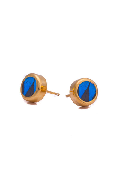 1-Real Butterfly Wings-A-SA-C1-Gold-butterfly-earrings-Royal-Blue-Circle-Papilio-Ulysses