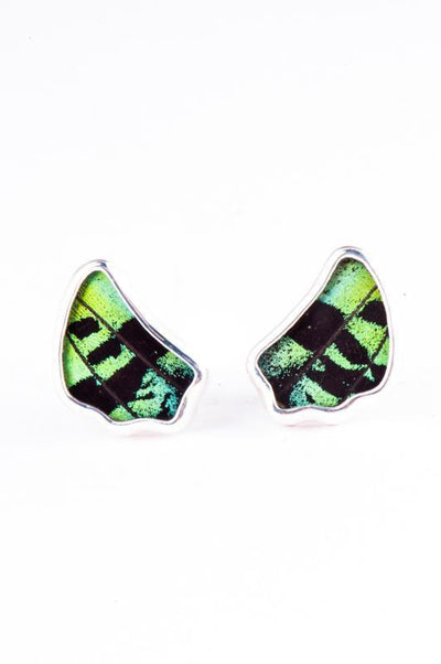 1-Real Butterfly Wings-A-SA-1B-Silver-butterfly-cufflinks-Shimmering-Green-Wing-Shaped-Chrysiridia-Madagascariensis-Top-wing