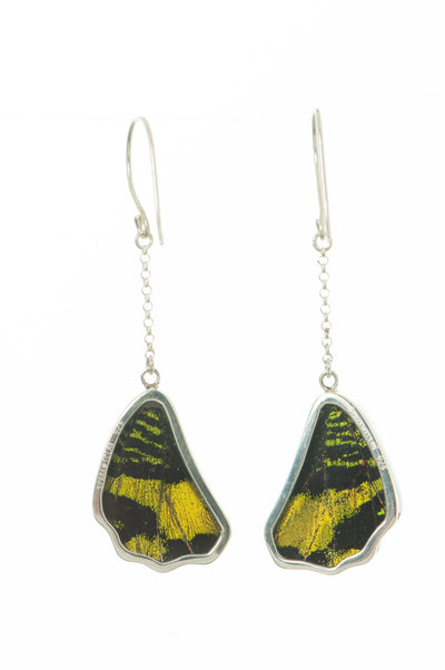 1-Real Butterfly Wings-A-SB-1B-Silver-butterfly-earrings-Shimmering-Green-Wing-Shaped-Chrysiridia-Madagascariensis-Top-wing