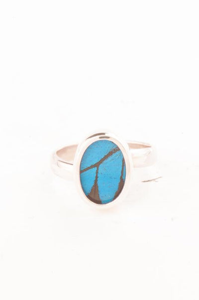 1-Real Butterfly Wings-A-SA-O1-Silver-butterfly-ring-Royal-Blue-Oval-Papilio-Ulysses
