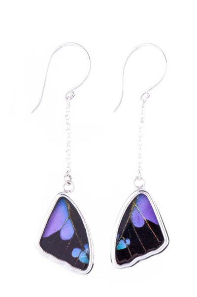 1-Real Butterfly Wings-A-SB-4C-Silver-butterfly-earrings-Purple-Dots-Wing-Shaped-Graphium-Weiskei