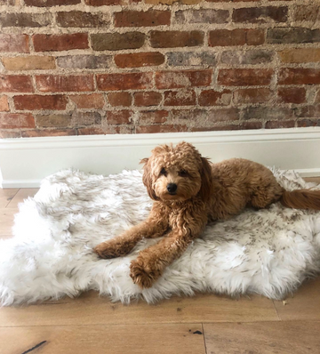 *NEW* COZY PAWS FAUX FUR SOOTHE RUG™