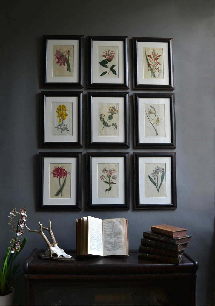 A set of Nine 18th Century Framed Botanical Engravings - William Curtis, London