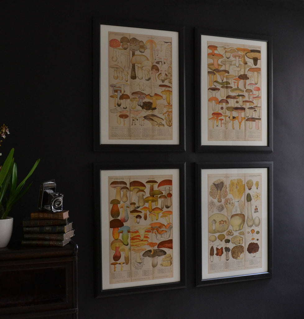 Four Framed Swedish Lithograph Prints Of Mushrooms, Circa 1901