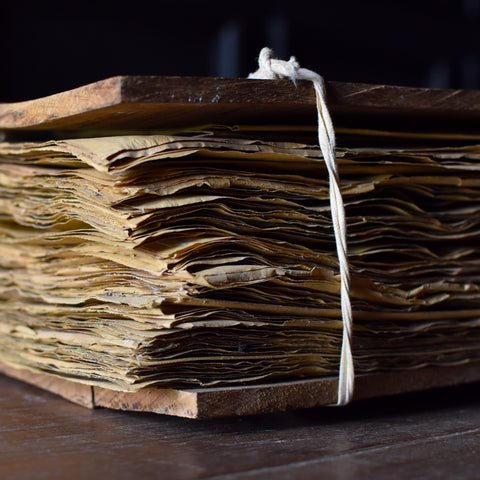 Superb Collection of 100 Pressed Botanical Plant Herbarium Specimens Bound in Oak Folio.
