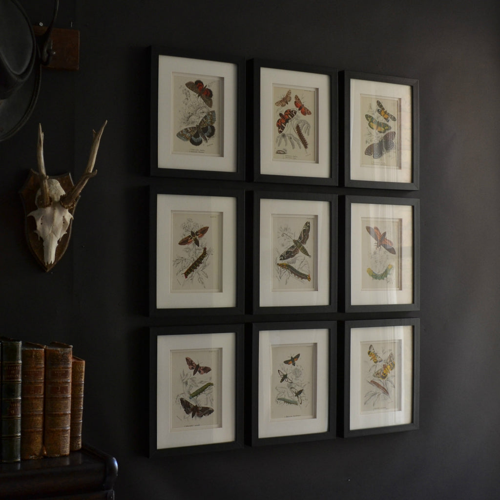 Nine Framed 19th Century Lithographs Of Moths And Butterflies, W.F Kirby