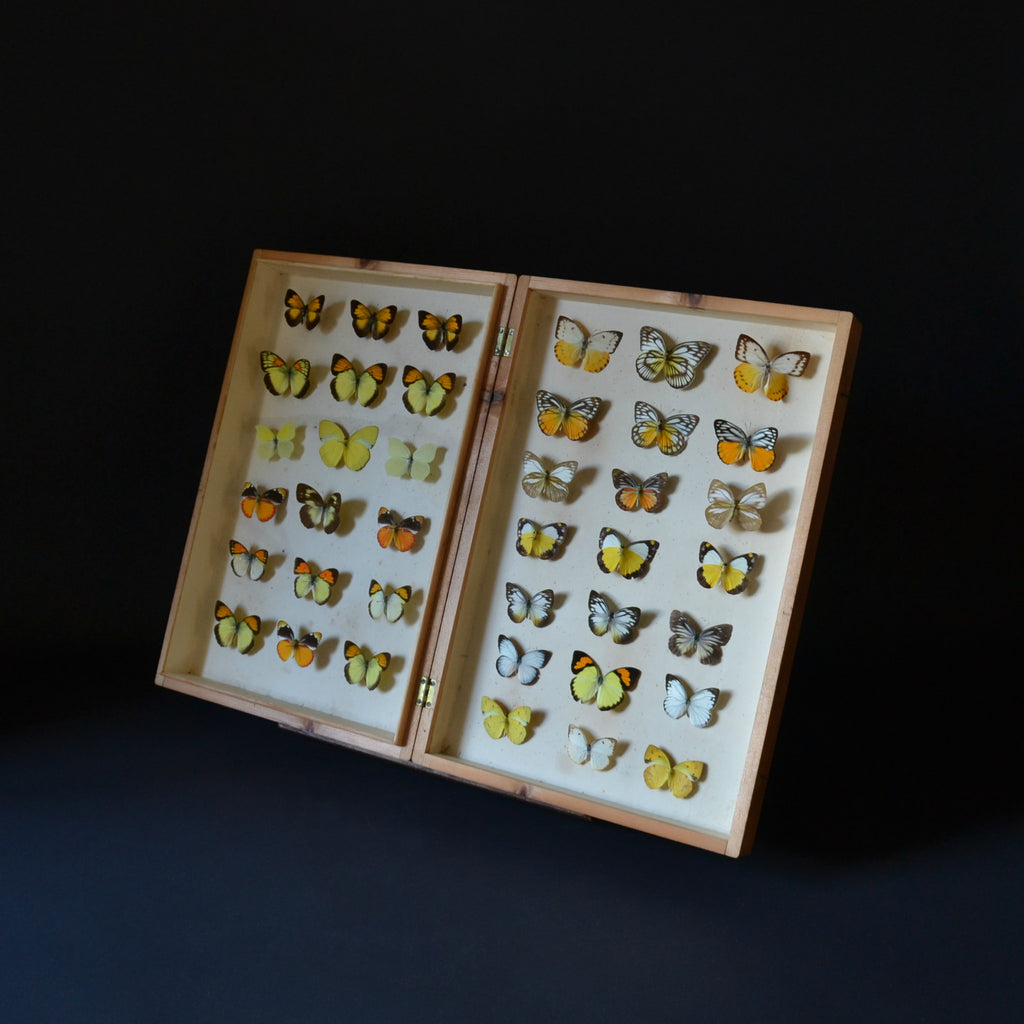 Vintage Cased Butterfly Specimens.