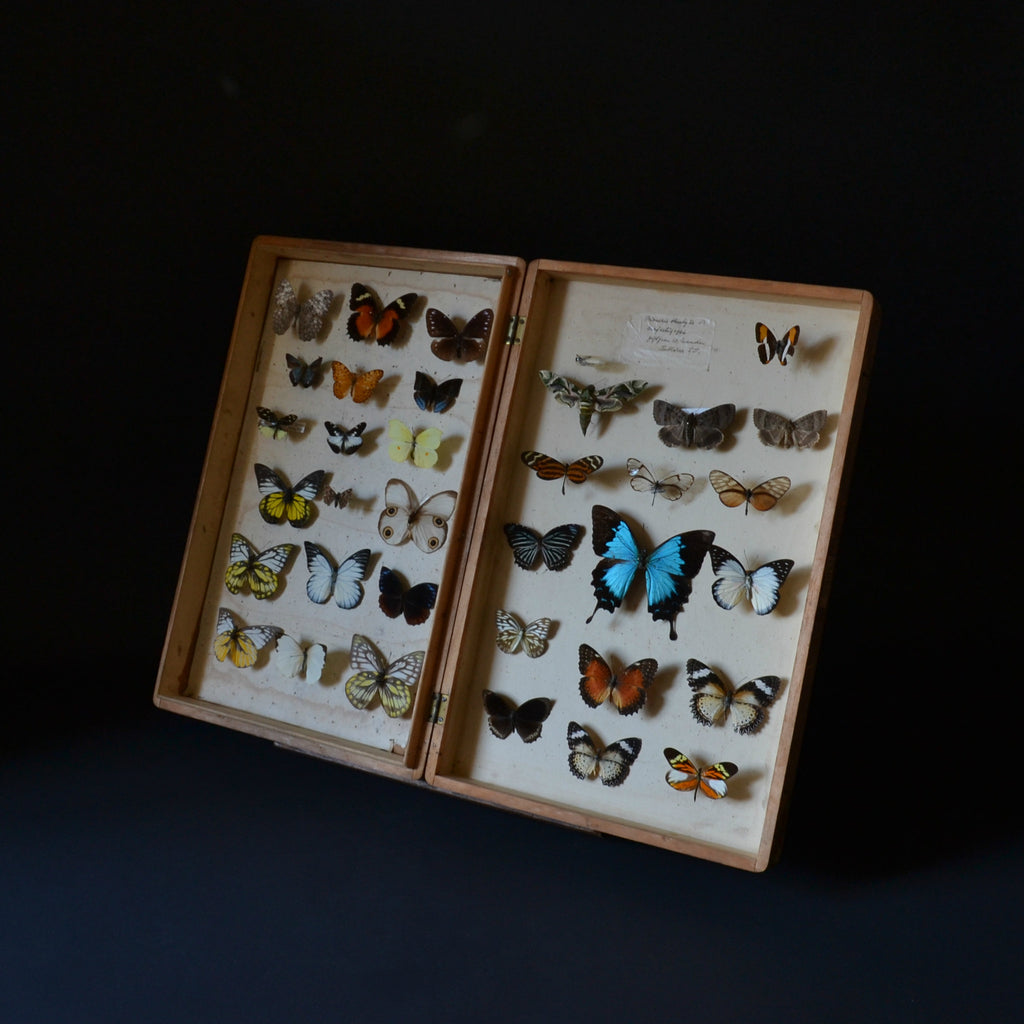 Vintage Cased Butterfly And Moth Specimens