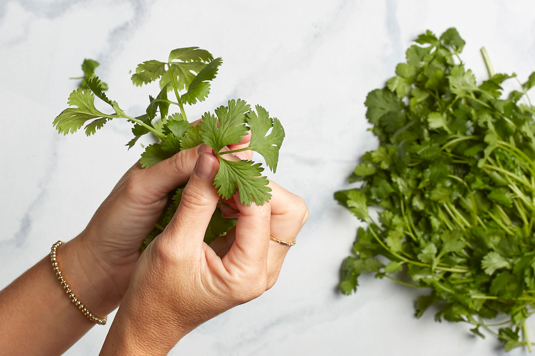 Facts About Cilantro