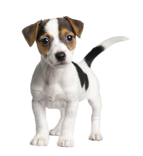 Puppy food - unique 2-phase diet