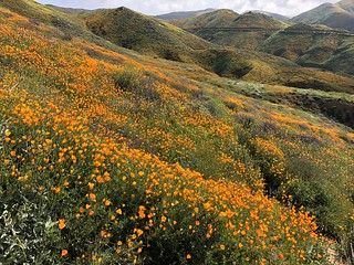 Lake Elsinore Wildflower Fun