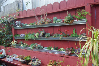 Succulents in the Gutter