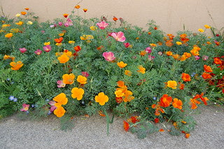 California Poppy Makeover Party
