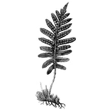 Load image into Gallery viewer, Polypody Fern Kid's Tee