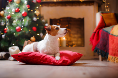 Creating Safe Spaces for your Dog this Festive Season