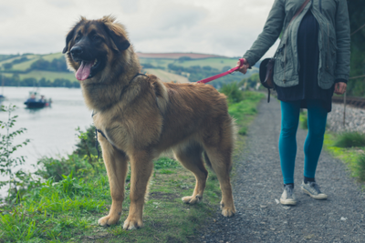 Make the most out of your winter dog walks
