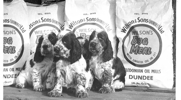 Over 150 years of Wilsons Pet Food