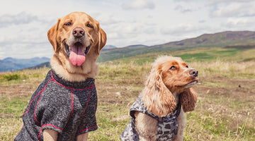 Essential Accessories for Dog Walking in Winter