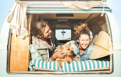 Caravan Holidays with your Dog