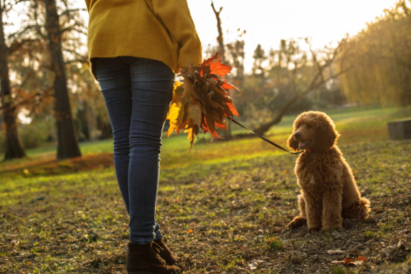 Using leaves to entertain your dog on a walk