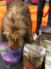Wilsons National Pet Show