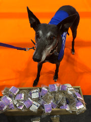 Greyhound National Pet Show