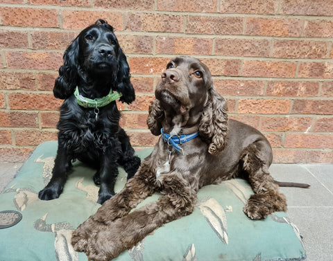 TFM Countrystore Dogs Bracken and Monty