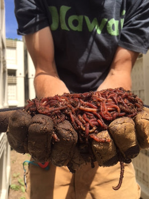 Colorado Worm Company Vermicompost