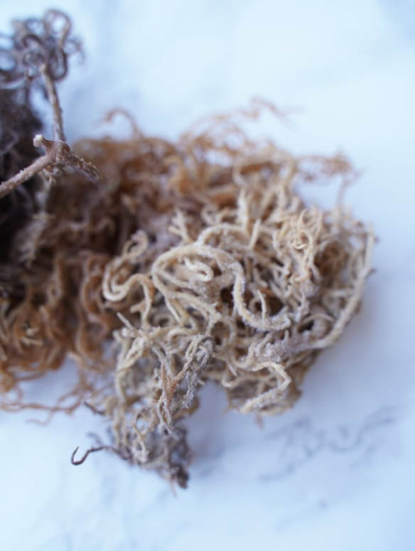 Wildcrafted African Sea Moss 4oz