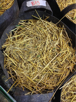 Barley Straw Mulch Black Cauldron