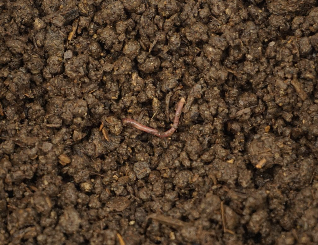 Colorado Worm Company Vermicompost Close Up