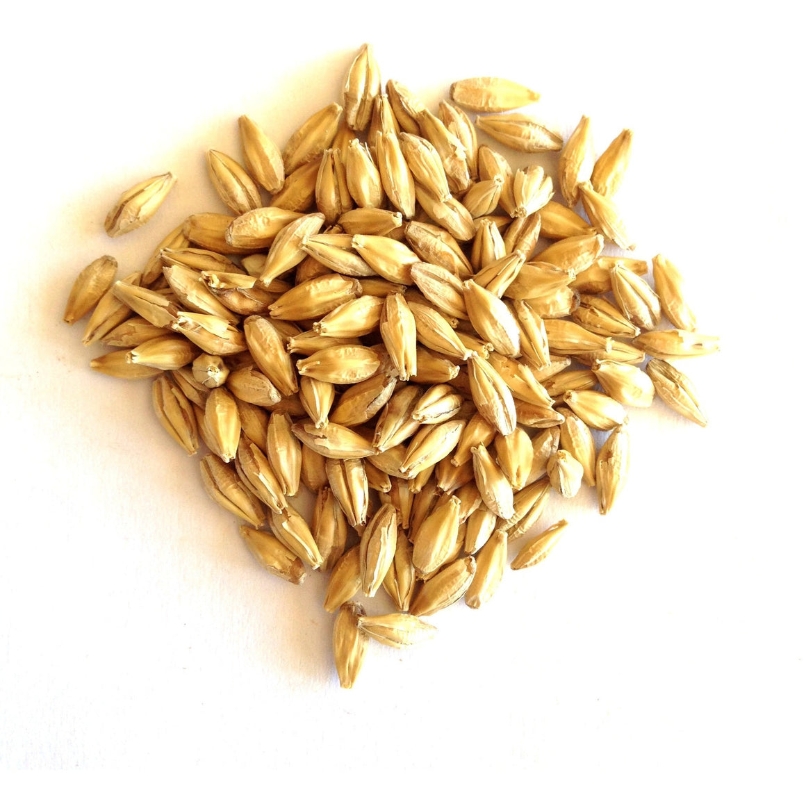 Malted Barley Grain for SST - Certified Organic