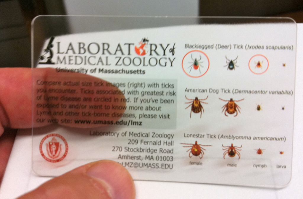 Tick Identification Card