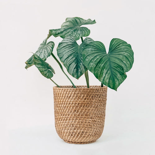 Large Cane Planter