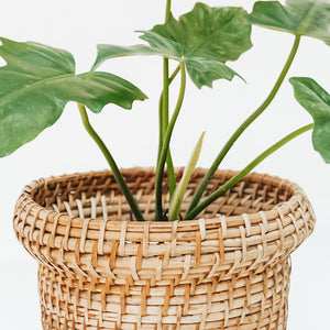 Bucket Cane Planter