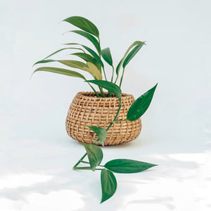 Flat Bottom Cane Planter