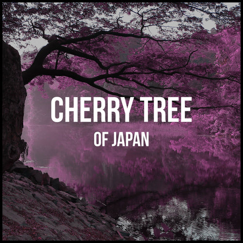 Cherry Tree Of Japan