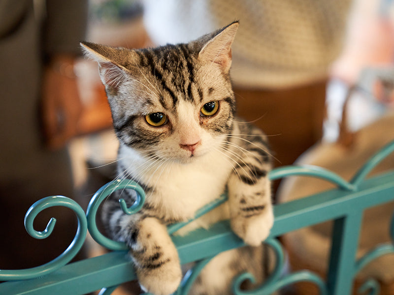 3 BEST gifts for your cat right NOW