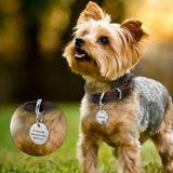 Small dog wearing engraved dog tags (also for cats)