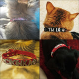 Custom leather dog collars: bling for your baby - in real life