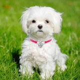 Cute collars for your beloved fur baby - great for small dogs too